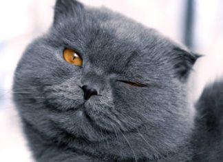 Прикольные картинки с животными для поднятия настроения