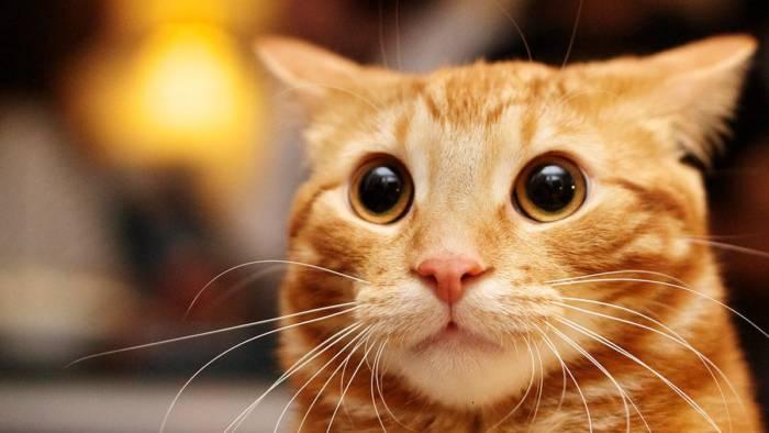 прикольный кот - позитивные каритнки
