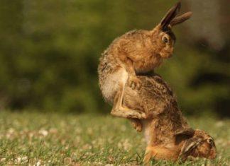 Прикольные фото животных картинки для настроения скачать