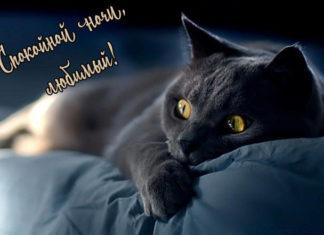 Пожелания спокойной ночи любимому в картинках бесплатно