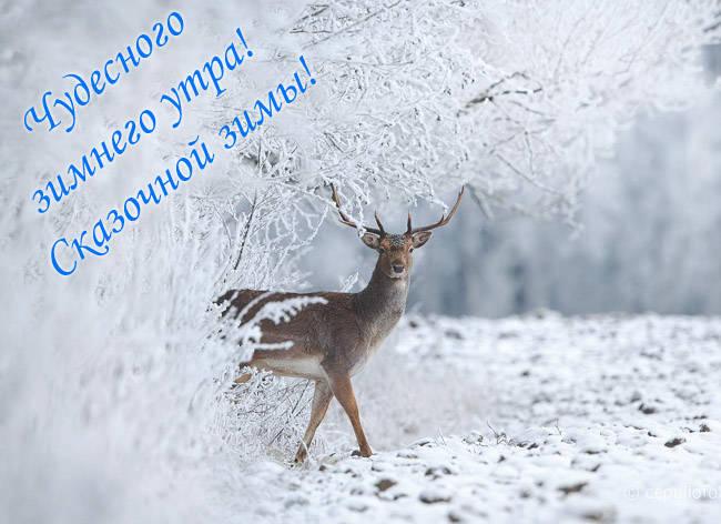 Очень красивые картинки доброе утро зимние