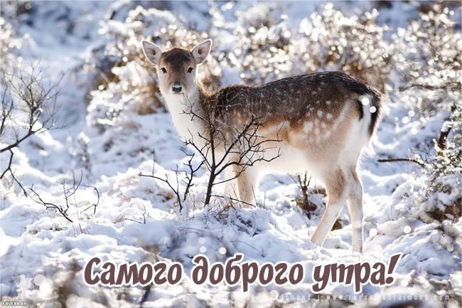 Доброе утро - зимние картинки с животными