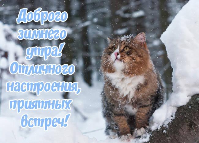 Картинки доброе утро крсивые зимние с котами