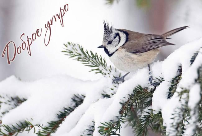 Красивые зимние картинки с Добрым утром