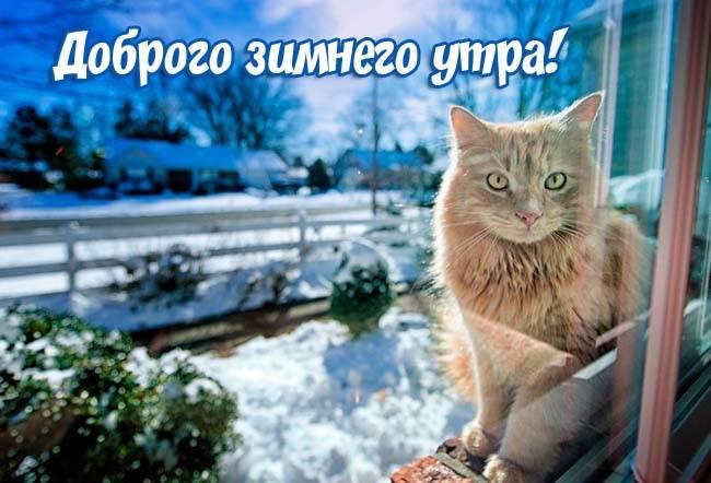 доброе утро картинки красивые зимние новые скачать