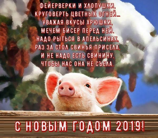 скачать прикольные картинки +с новым годом свиньи