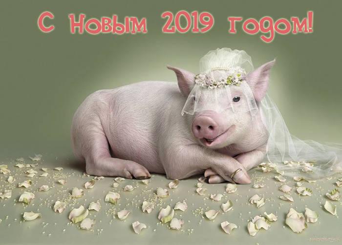 Прикольные и смешные картинки с Новым 2019 годом свиньи