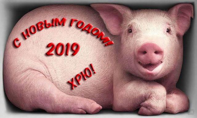 Прикольные картинки с Новым 2019 годом свиньи