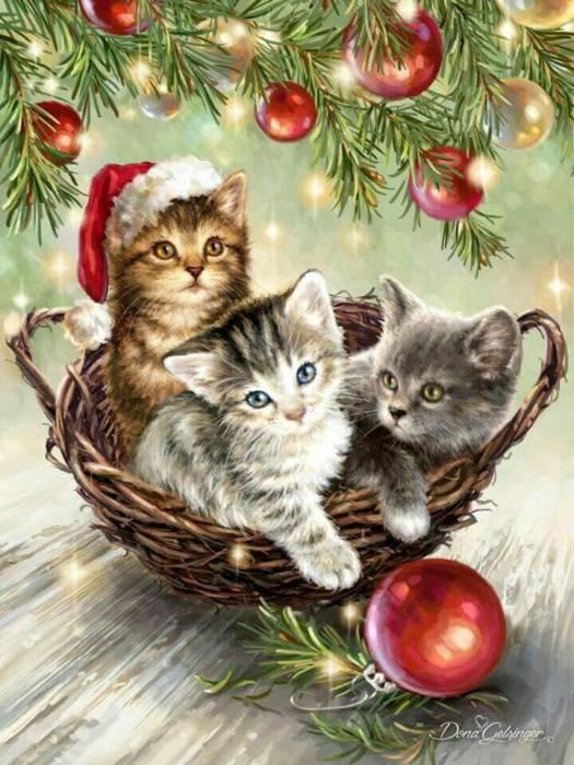 Католичсекое Рождество - красивые картинки с котятами