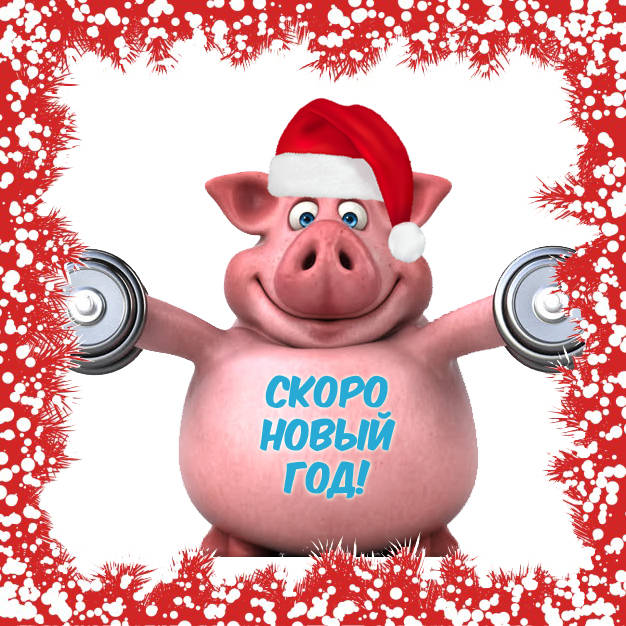 Скоро Новый год свиньи - картинки прикольные бесплатно скачать