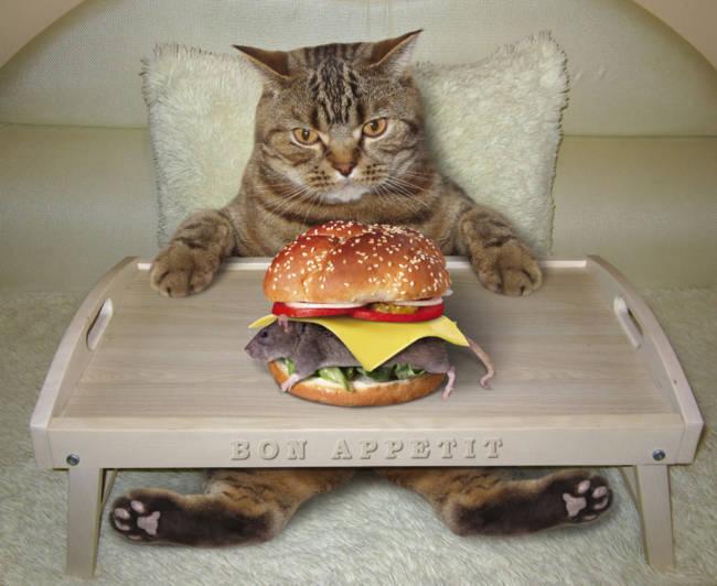Самые прикольные картинки с котами смешные фото