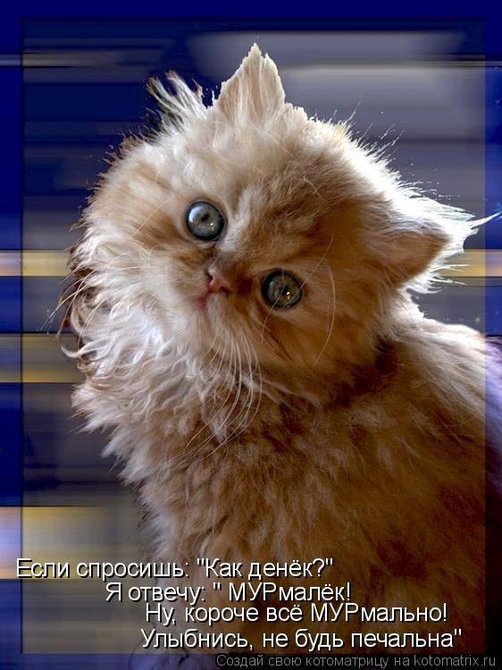 Прикольные картинки с котами (24 фото)