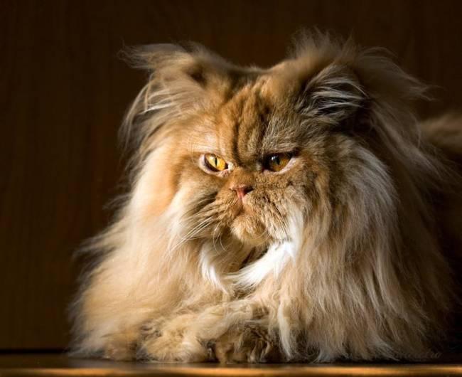 реклама космолот с котами