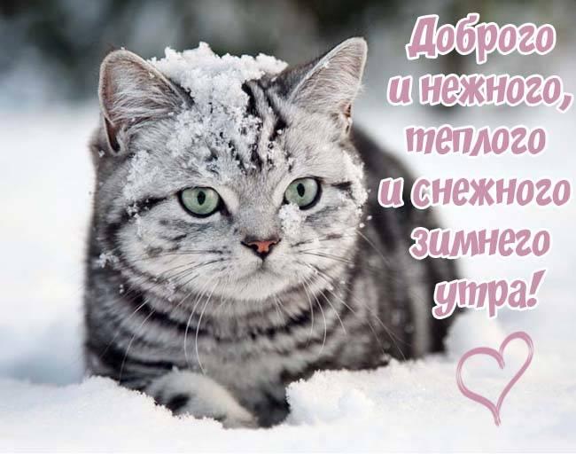Доброе утро среда - картинки прикольные, зимние, красивые