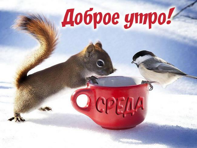 Доброе утро среда - картинки прикольные, зимние