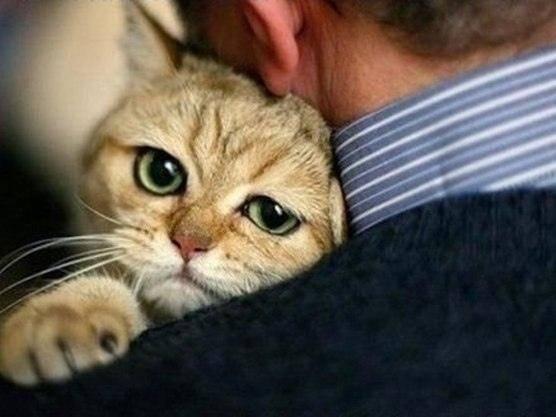 Позитивные коты - картинки для поднятия настроения