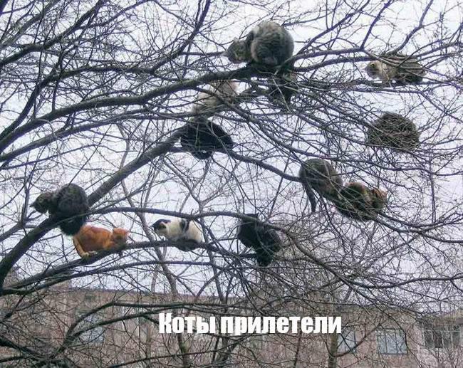 Коты прилетели - картинки прикольные про весну