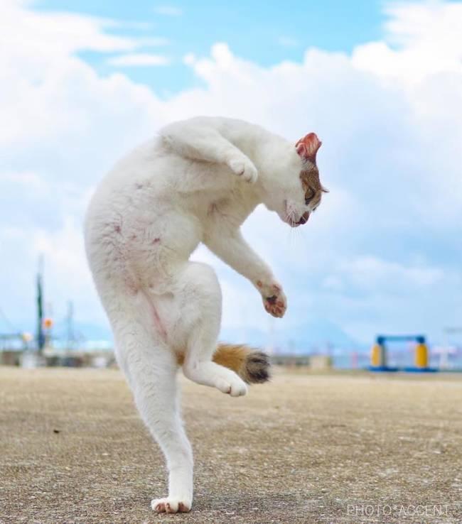 Позитивные картинки для поднятия настроения (прикольные коты и собаки)