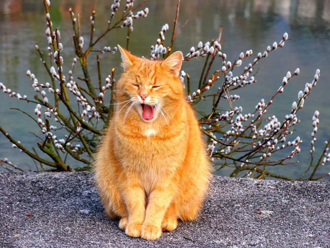Картинки про весну с котами