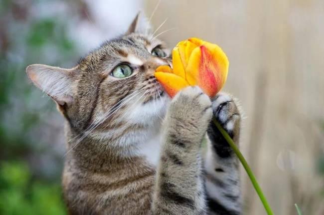 Картинки про весну прикольные и красивые