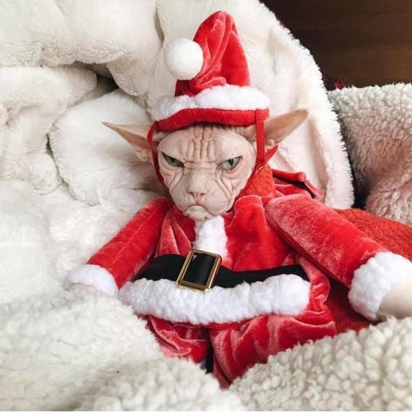 Смешные до слез коты и кошки фото прикольные