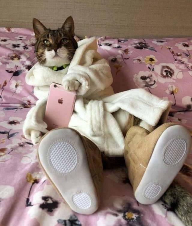 Смешное с котами - фотографии прикольные