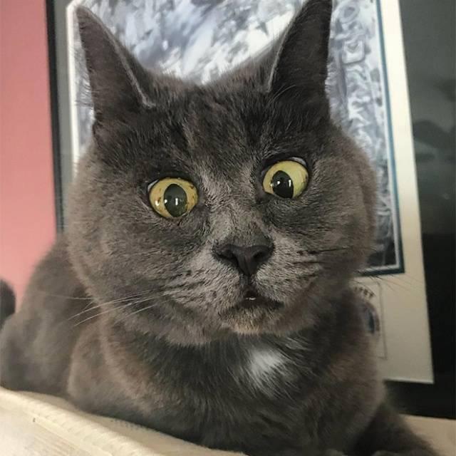 Самый смешной кот фото