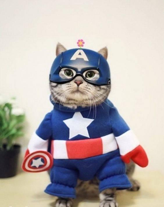 Фото котов и кошек смешные до слез бесплатно