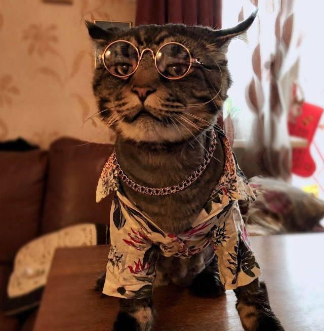 Прикольные фото котов