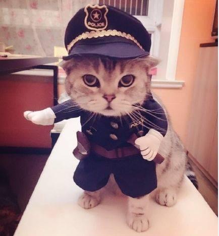Прикольные коты - смешное фото (кот полицейский)