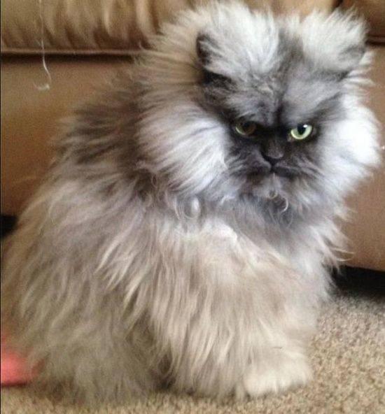 Самый смешной кот - фото с котами