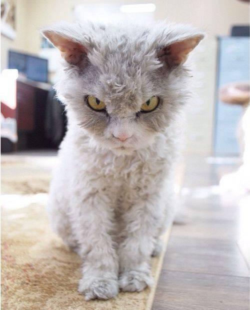 самые смешные фото котов скачать