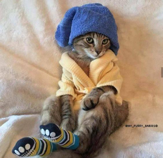 Смешной кот в пижаме