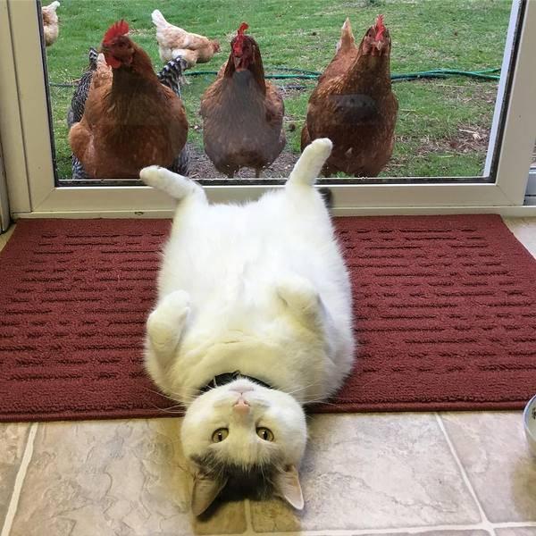 Смешные фото с котом