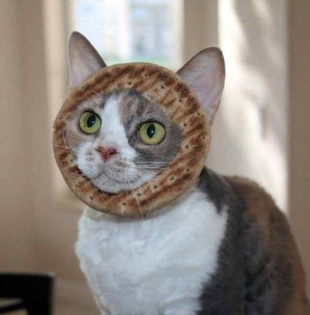 Самые смешные фото с котами