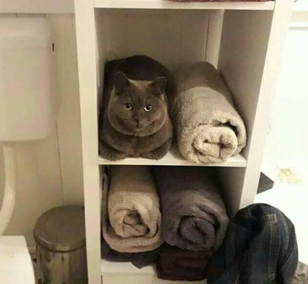 Приколы с котами смешные фото до слез