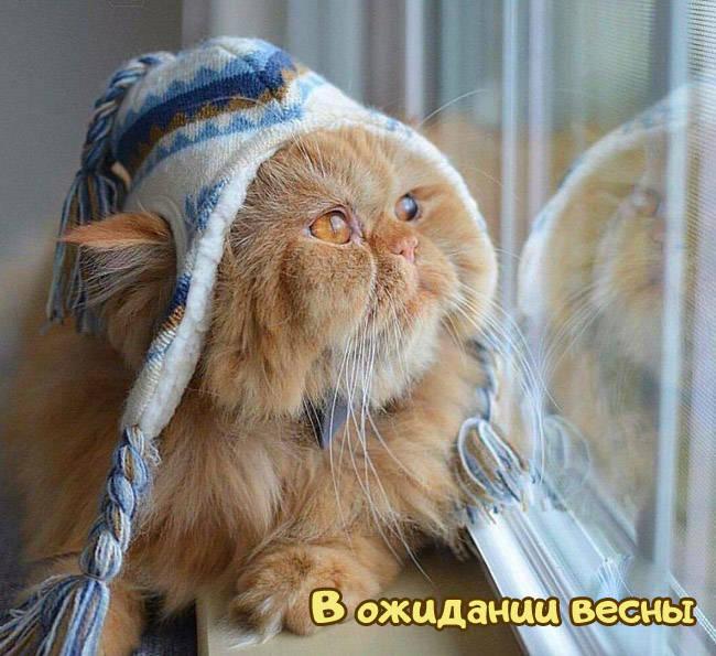 Картинки про весну прикольные с котами