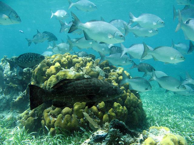 Интересные факты о голубой дыре Белиз - фауна