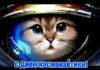 Прикольные поздравления с Днем космонавтики (стихи, картинки)