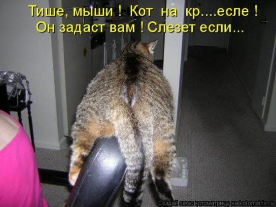 Самые смешные картинки с надписями до слез про кошек, дедушке
