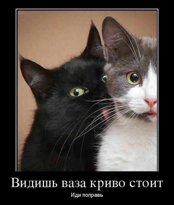 Смешные картинки про котов с надписями