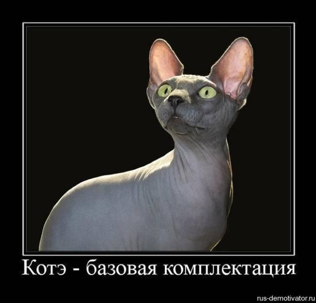Смешные картинки про котов с надписями скачать