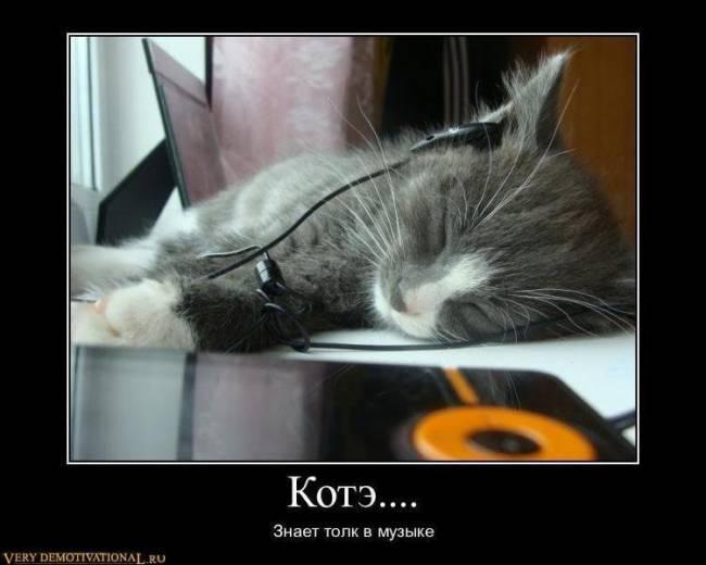 Самые смешные картинки про котов с надписями и без (25 штук)