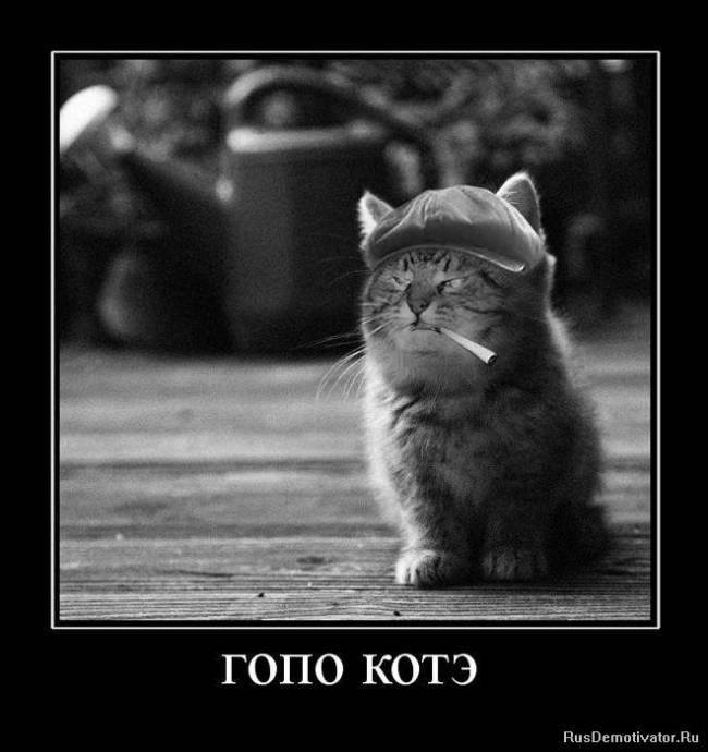 Прикольные картинки демотиваторы с котами, красивые