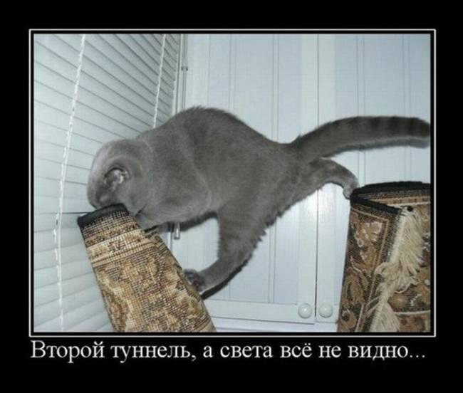 смешные коты прикольные картинки с надписью