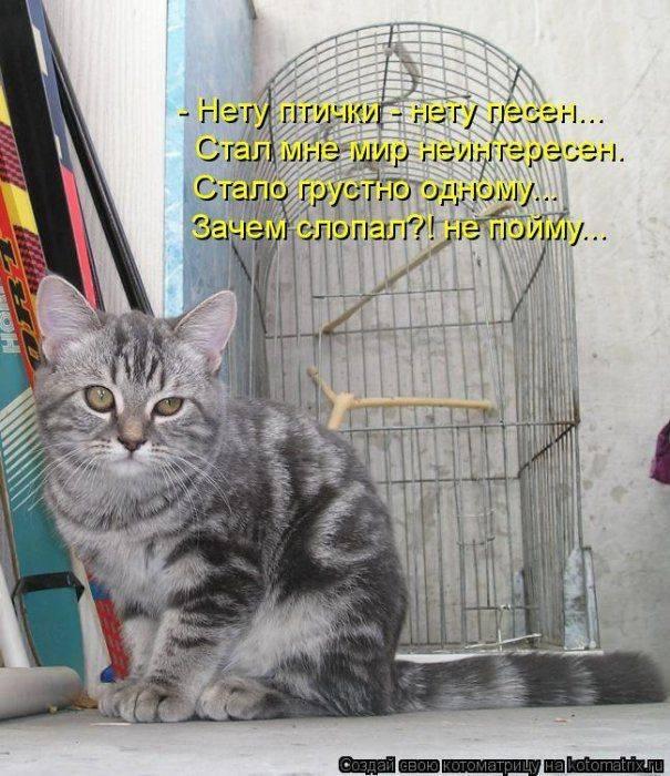 Смешные и прикольные картинки про котов с надписями