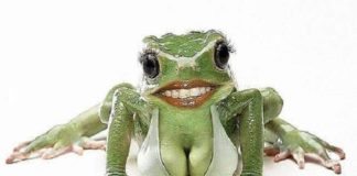 сказка про менеджера Василия и лягушку