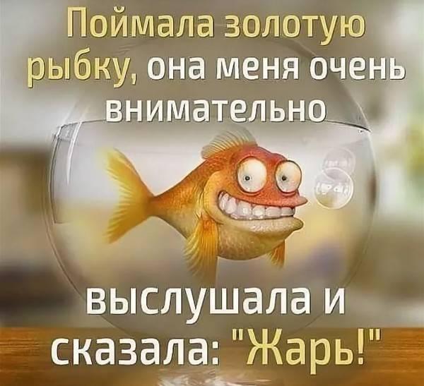 Самые смешные анекдоты про золотую рыбку