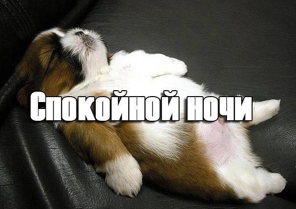 Прикольные картинки спокойной ночи для друга