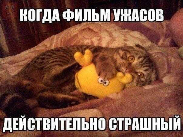 Прикольные картинки про котов и кошек (40 фото)